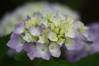 16 Bunga Terindah di Dunia